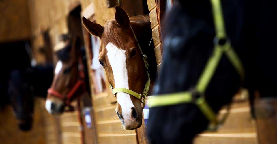 horsemen--small